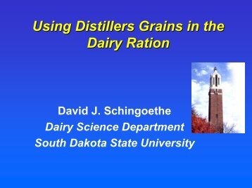 Using Distillers Grains in the Dairy Ration - Distillers Grains By ...