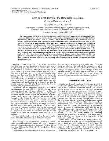 Azospirillum brasilense - Bashanfoundation.org