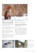 Sådan bekæmper du rotter og mus uden gift - Favrskov Kommune - Page 3