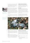 Sådan bekæmper du rotter og mus uden gift - Favrskov Kommune - Page 4