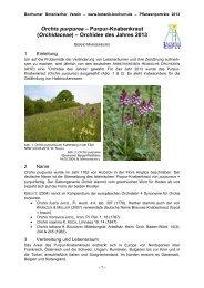 Orchis purpurea - Arbeitskreis Heimische Orchideen Nordrhein ...