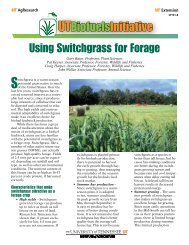 Using Switchgrass for Forage - UT Extension