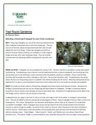 Flowering Crabapple for Home Landscape - El Paso County ...