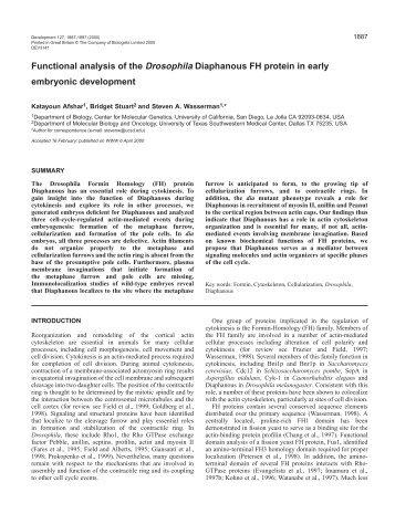 Role of Diaphanous in Drosophila embryos - Development - The ...