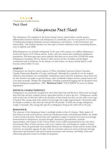 Gombe Chimpanzee Biographies Jane Goodalls Wild Chimpanzees