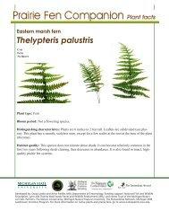 Eastern marsh fern - Native Plants - Michigan State University