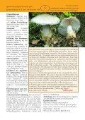 Eier-Wulstling Amanita ovoidea - Tintling - Seite 2