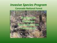 Coronado National Forest's invasive species program