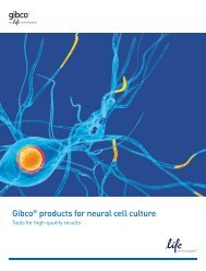 Gibco® products for neural cell culture