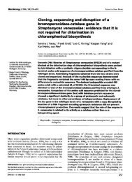 Cloning, sequencing and disruption  of a ... - Microbiology