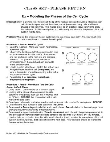 Science Tutor: Phases of Mitosis Activity Worksheet