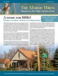 Spring 2006 - Braddock Bay Bird Observatory