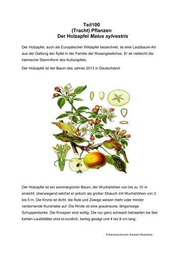 Teil100 (Tracht) Pflanzen Der Holzapfel Malus sylvestris