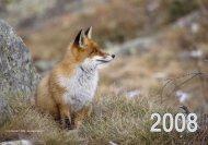 Kalender 2008 - Markus P. Stähli Wildlife Photography