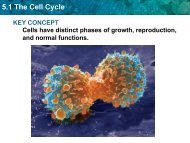 Cell Cycle Notes - Warren County Schools
