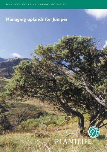 Managing uplands for Juniper - Plantlife