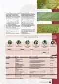 Principais doenças - Page 5
