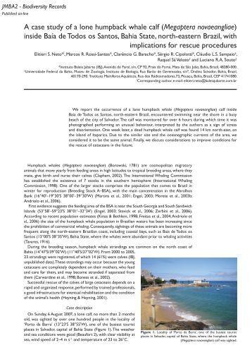 A case study of a lone humpback whale calf (Megaptera ... - Tauassu