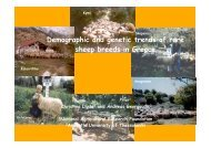 Demographic and genetic trends of rare sheep breeds in Greece