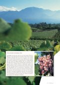 Vignoble - STLDESIGN - Page 4