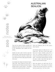 Australian Sealion - Zoos South Australia