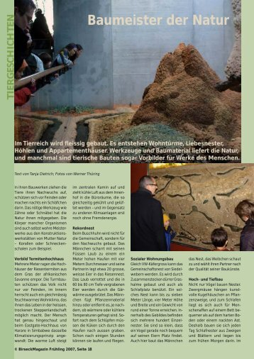 Baumeister der Natur - Birseck Magazin