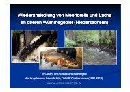 Wiederansiedlung von Meerforelle und Lachs im ... - Wanderfische