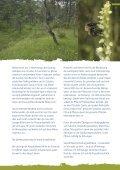 Kriechendes Netzblatt - Bayerns UrEinwohner - Seite 5