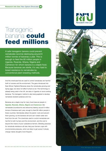 Transgenic banana could feed millions - Research Into Use