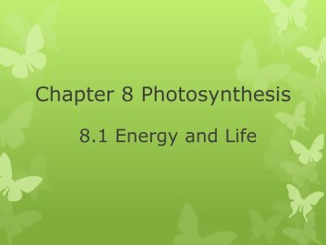 Chapter 8 Photosynthesis 2011.pdf