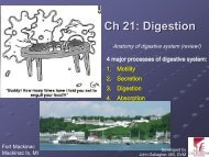 Chapter 21: The Digestive System