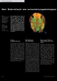 Der Zebrafisch als entwicklungsbiologisc - Carl Zeiss
