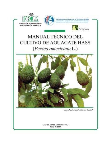 cultivo del aguacate Hass - Cuenta del Milenio - Honduras