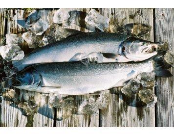 Southeast Alaska Watershed Council