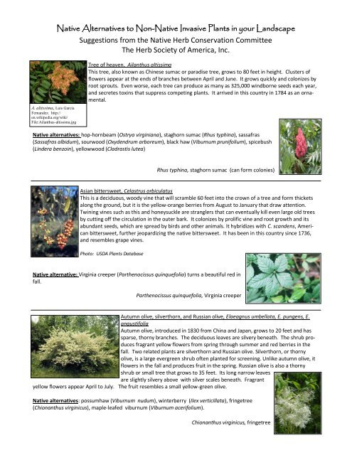 Native Alternatives To Non Native Invasive Plants In The Herb