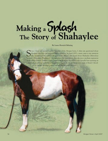The Story of Shahaylee - American Morgan Horse Association