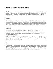 Basil Care and Varieties - Master Gardeners