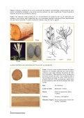 Guía de Procesamiento Industrial - WWF - Page 4