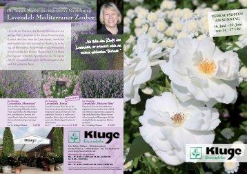Lavendel: Mediterraner Zauber - Kluge Baumschulen