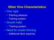 Establishing a Vineyard From the Beginning