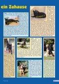 Heft 4/2002 - Pro Tier - Page 5
