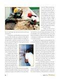 Arqueologia O Forte do Brum - FunCEB - Page 4
