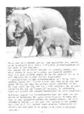 1987-09-02 - Vrienden van Blijdorp - Page 7