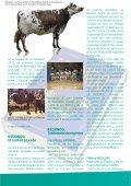 Redondo, la leyenda normanda - Sersia France - Page 3