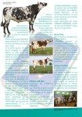 Redondo, la leyenda normanda - Sersia France - Page 4