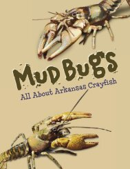 All About Arkansas Crayfish - Arkansas Game and Fish Commission