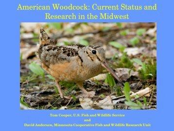 American Woodcock - University of Minnesota