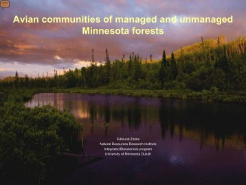 Avian communities of managed and unmanaged Minnes ota forests