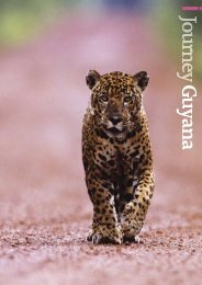 Guyana - Journey Latin America