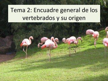 Tema 2: Encuadre general de los vertebrados y su ... - Aragosaurus